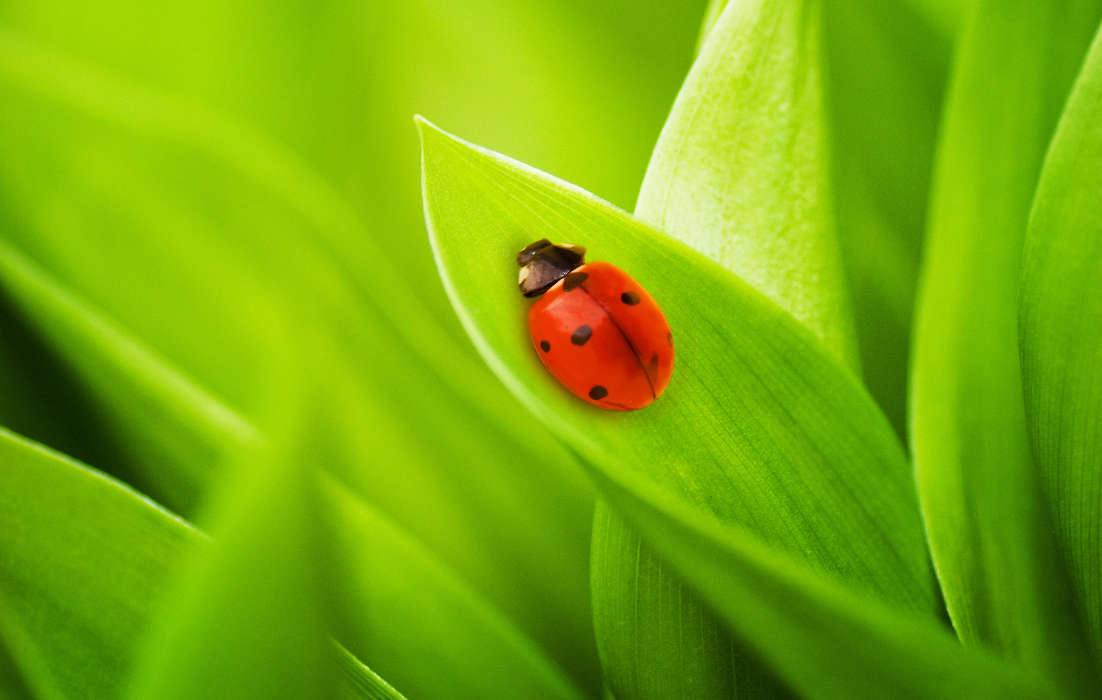Ladybugs, Insects, Grass
