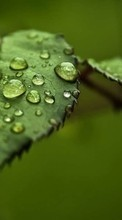 Drops,Leaves,Objects