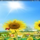 Además de los fondos de pantalla animados para Android Night nature HD, descarga la apk gratis de los salvapantallas Sunflowers.