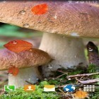 Además de los fondos de pantalla animados para Android Light drops pro, descarga la apk gratis de los salvapantallas Autumn mushrooms.