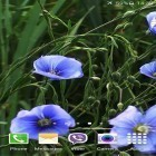 Además de los fondos de pantalla animados para Android Light drops pro, descarga la apk gratis de los salvapantallas Blue flowers by Jacal video live wallpapers.