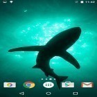 Además de los fondos de pantalla animados para Android Fireworks by Live Wallpapers HD, descarga la apk gratis de los salvapantallas Sharks by Fun Live Wallpapers.
